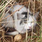 De kat of huiskat (Felis silvestris catus) is een van de oudste huisdieren van de mens. De gedomesticeerde kat behoort tot de familie der katachtigen. Ook het woord poes is gangbaar, soms meer specifiek in het geval van een vrouwelijke kat. Een mannelijke kat is een kater, en een jong katje een kitten.